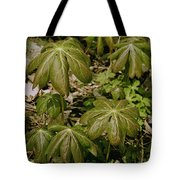 May Apples Tote Bag