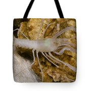 Mclanes Cave Crayfish Tote Bag