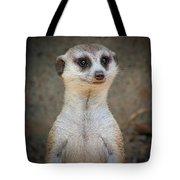 Meerkat Manor Tote Bag
