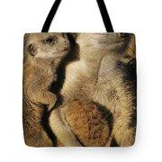 Meerkat Pups With Their Caretaker Tote Bag