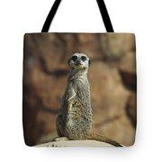 Meerkat Suricata Suricatta Sunning Tote Bag by Konrad Wothe