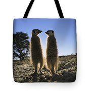 Meerkats Start Each Day With A Sunbath Tote Bag