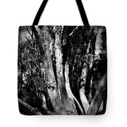 Melaleuca Tree Tote Bag