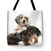 Merle Dachshund Pups Tote Bag
