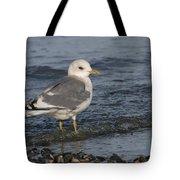 Mew Gull Tote Bag