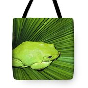 Mexican Giant Tree Frog Pachymedusa Tote Bag