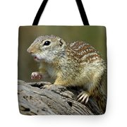 Mexican Ground Squirrel Tote Bag