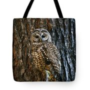 Mexican Spotted Owl Camouflaged Against Tote Bag