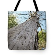 Mighty Tree And The Bark Beetle Tote Bag