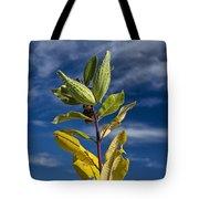 Milkweed Pods Against A Blue Sky Background Tote Bag