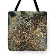 Mimic Octopus Head, North Sulawesi Tote Bag