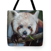 Mischievious Red Panda Tote Bag