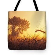 Mist In A Barley Field At Sunset Tote Bag
