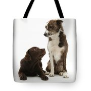 Mixed Breed And Chocolate Lab Tote Bag