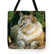 Mixed Breed Cat--mia Tote Bag