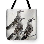 Mockingbirds Mimidae Galapagos, Equador Tote Bag