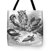 Mollusk Tote Bag