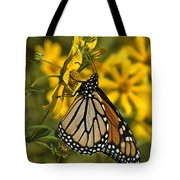 Monarch Butterfly On Tickseed Sunflower Din146 Tote Bag