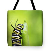 Monarch Caterpillar  Tote Bag