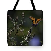 Monarch In Morning Light Tote Bag