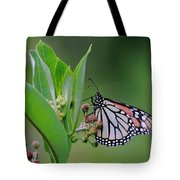 Monarch On Milkweed Tote Bag