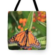 Monarch Sipping Tote Bag