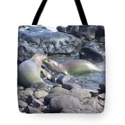 Monk Seals Tote Bag