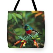 Montane Double-collared Sunbird Tote Bag