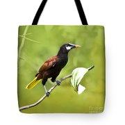 Montezuma Oropendula - Dp Tote Bag