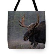 Moose, Algonquin Provincial Park Tote Bag