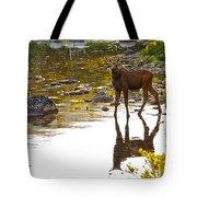 Moose Baby 2 Tote Bag