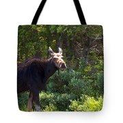 Moose Baxter State Park 4 Tote Bag