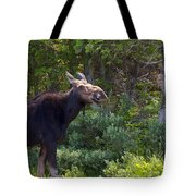 Moose Baxter State Park Maine 3 Tote Bag
