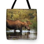Moose Drinking In A Pond, Tombstone Tote Bag