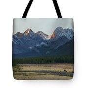 Moose Grazing At Sunset With Mountains Tote Bag by Philippe Widling
