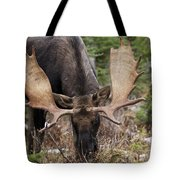 Moose. Male Feeding In A Forested Area Tote Bag