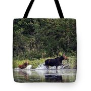 Moose N Baby..out Of Here Tote Bag