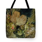 Moray Eel, Belize Tote Bag