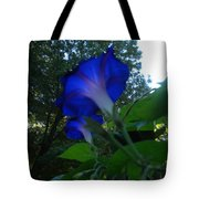Morning Glory 01 Tote Bag