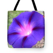 Morning Glory Fire Tote Bag
