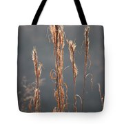Morning Sunshine On Tall Reeds Tote Bag