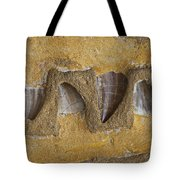 Mosasauras Teeth Tote Bag by Garry Gay