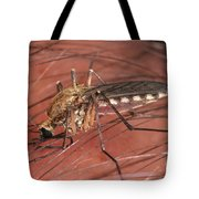 Mosquito Biting A Human Tote Bag