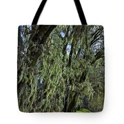 Moss Covered Trees Tote Bag