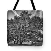 Moss-draped Live Oaks Tote Bag