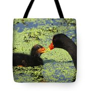 Mother Common Gallinule Feeding Baby Chick Tote Bag