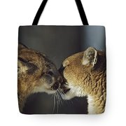Mountain Lion Felis Concolor Cub Tote Bag by David Ponton