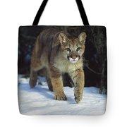 Mountain Lion Felis Concolor Idaho, Usa Tote Bag