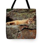 Mountain Lion Puma Concolor Lounging Tote Bag by Gerry Ellis