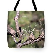 Mourning Dove - Board Of Directors Tote Bag